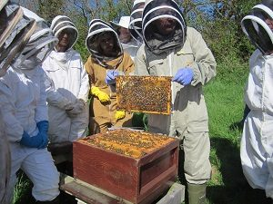 Beginners at the teaching apiary