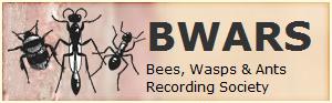 Bees, Wasps & Ants Recording Society