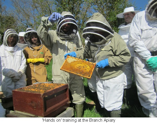 'Hands on' instruction with the Bee Inspector