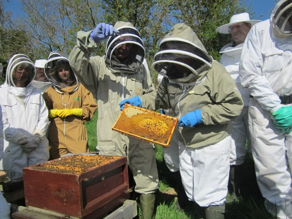 Beginners 'hands on' training at the branch apiary