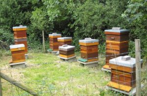 Non-treatment apiary