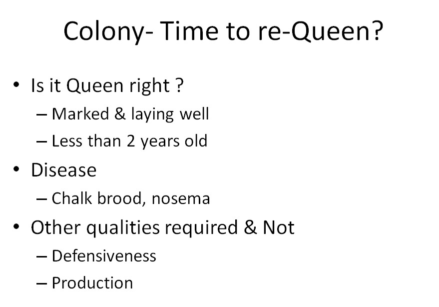 Colony - Time to re-Queen?