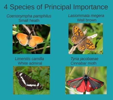 4 principal species